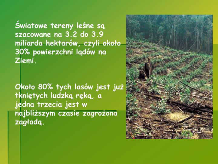 Światowe tereny leśne są szacowane na 3.2 do 3.9 miliarda hektarów, czyli około 30% powierzchni lądów na Ziemi.