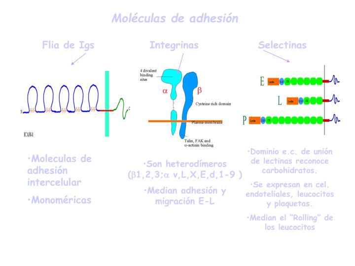Moléculas de adhesión