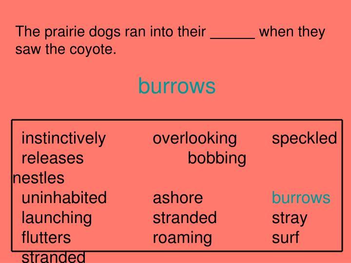 The prairie dogs ran into their