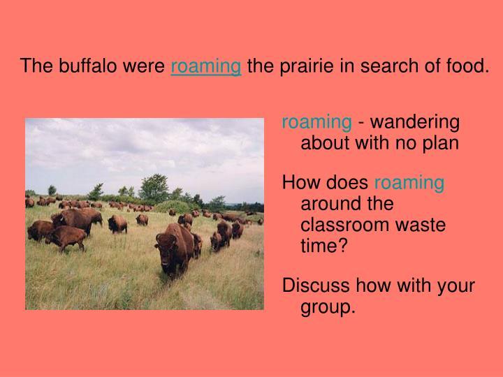 The buffalo were