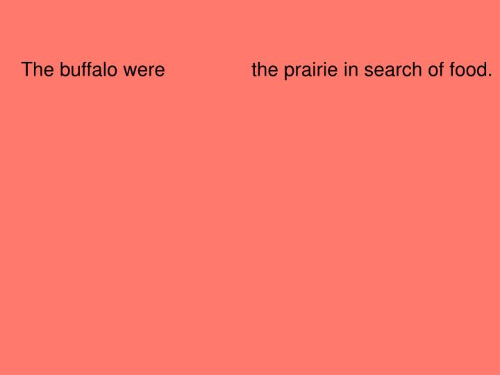 The buffalo were                the prairie in search of food.