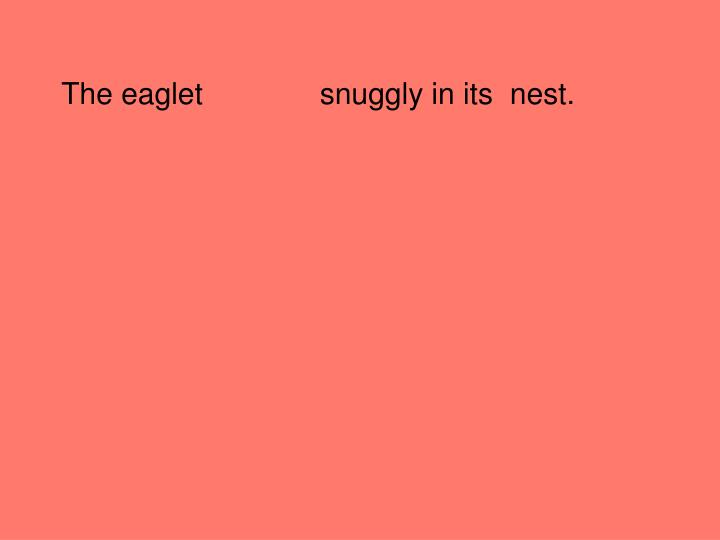 The eaglet              snuggly in its  nest.