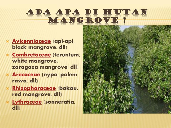 Ada apa di hutan Mangrove ?