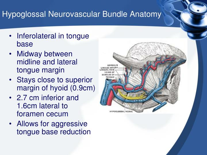 Hypoglossal Neurovascular Bundle Anatomy