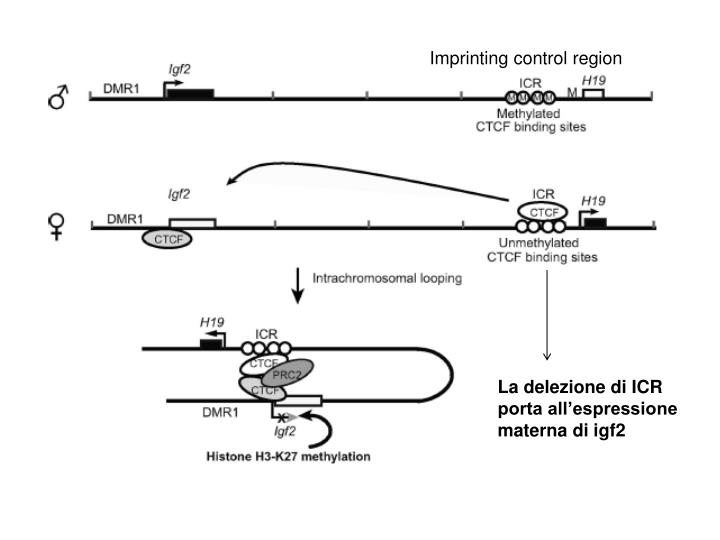 Imprinting control region
