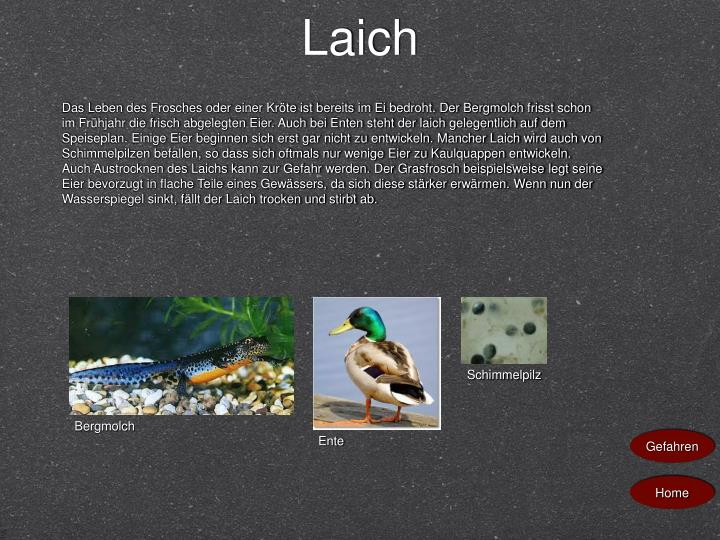 Laich