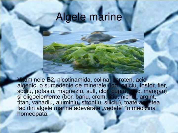 Algele marine
