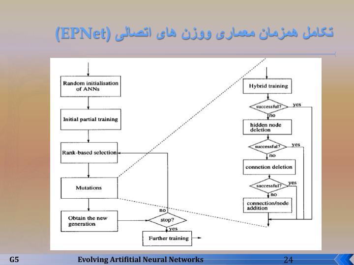 تکامل همزمان معماری ووزن های اتصالی (
