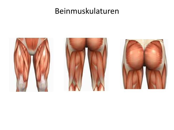 Beinmuskulaturen
