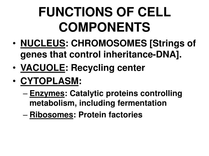 FUNCTIONS OF CELL COMPONENTS