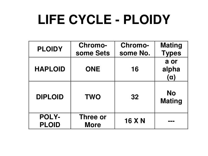 LIFE CYCLE - PLOIDY