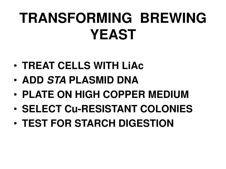 TRANSFORMING  BREWING YEAST