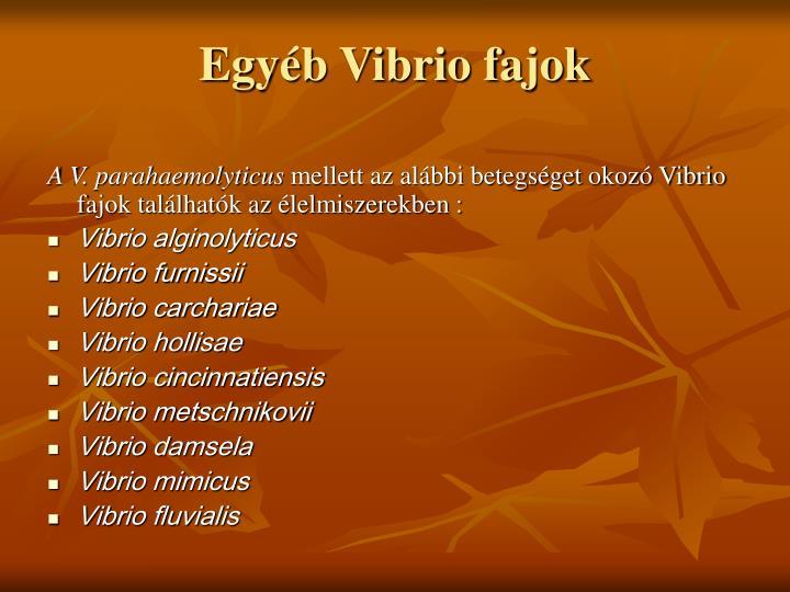 Egyéb Vibrio fajok