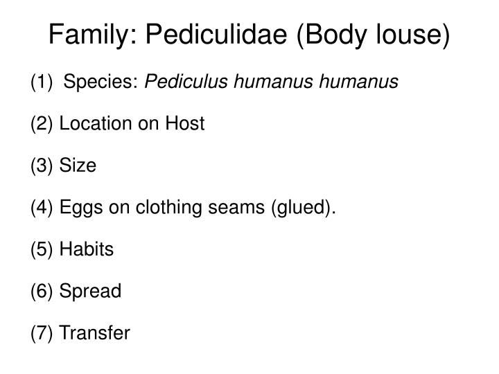 Family: Pediculidae (Body louse)