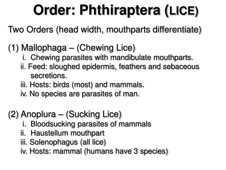 Order: Phthiraptera (