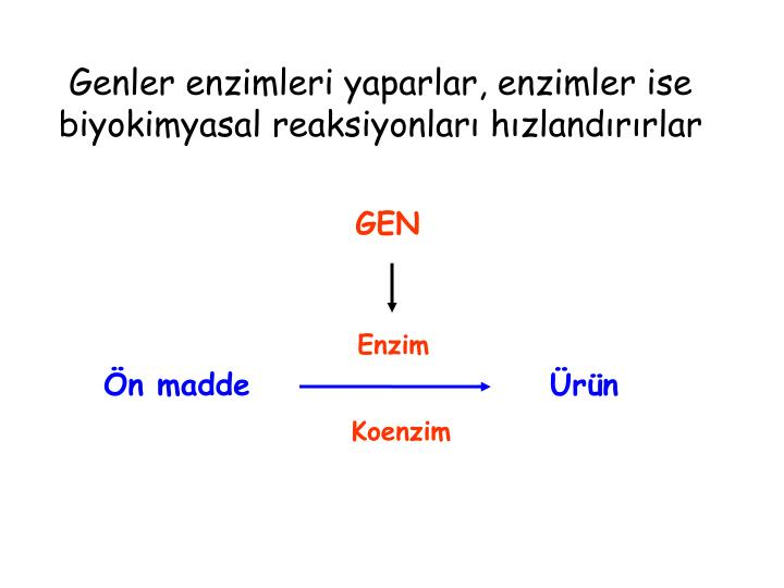 Genler enzimleri yaparlar, enzimler ise biyokimyasal reaksiyonları hızlandırırlar