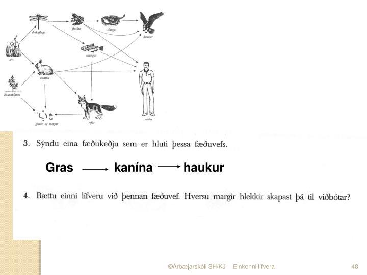 Gras            kanína         haukur