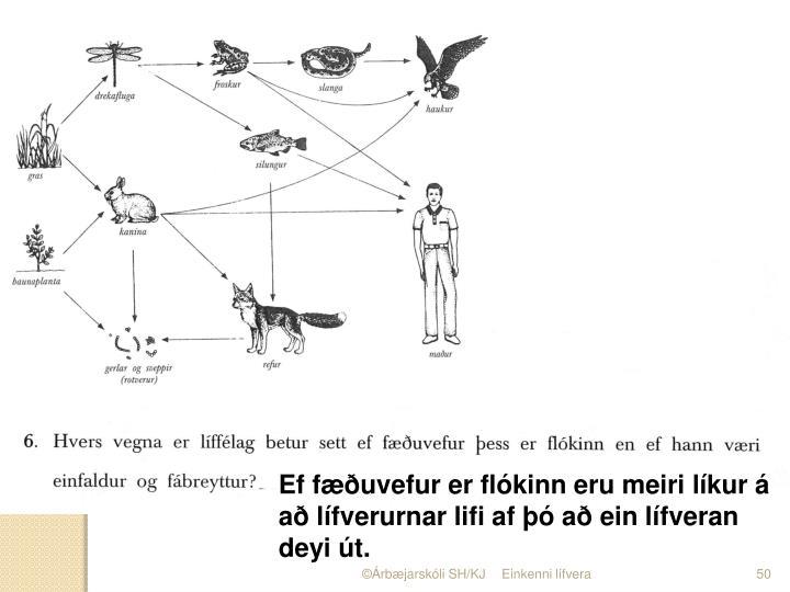 Ef fæðuvefur er flókinn eru meiri líkur á að lífverurnar lifi af þó að ein lífveran deyi út.