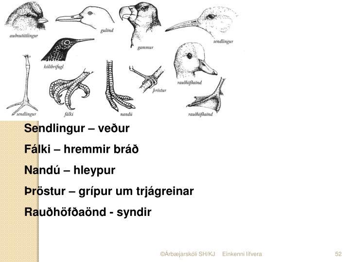 Sendlingur – veður