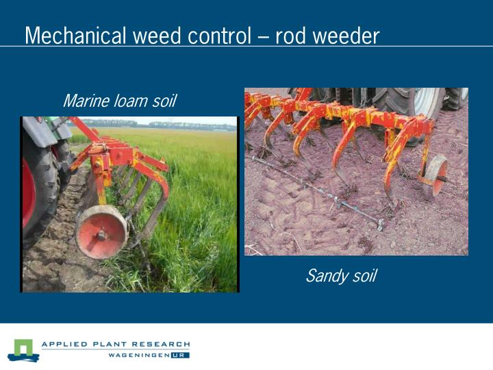 Mechanical weed control – rod weeder