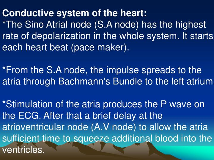 Conductive system of the heart: