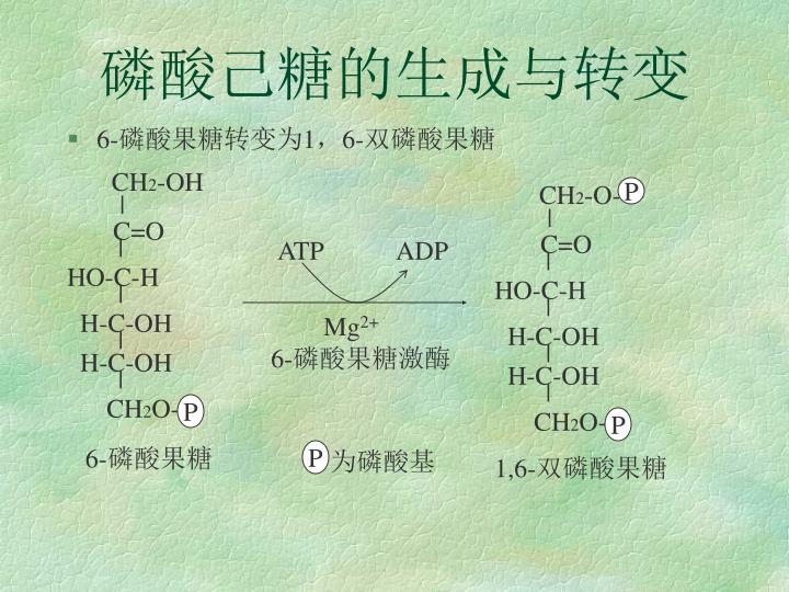 磷酸己糖的生成与转变