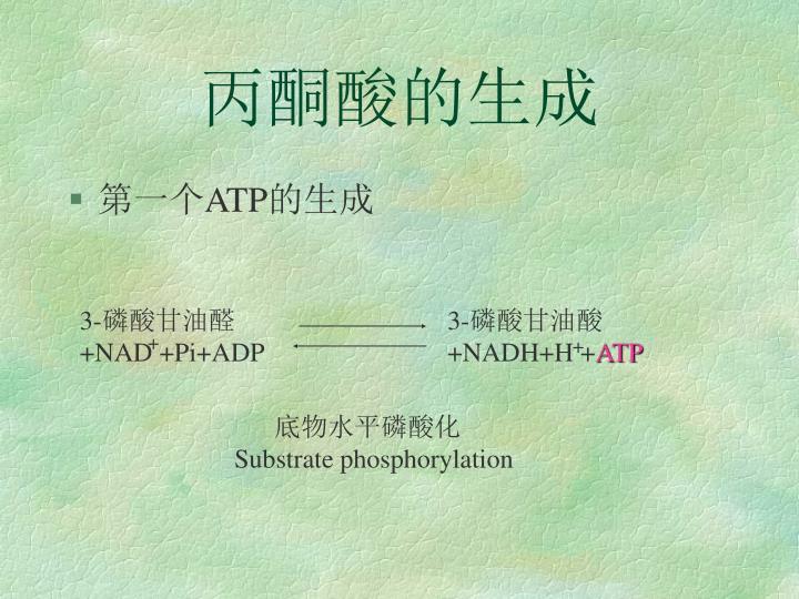 丙酮酸的生成