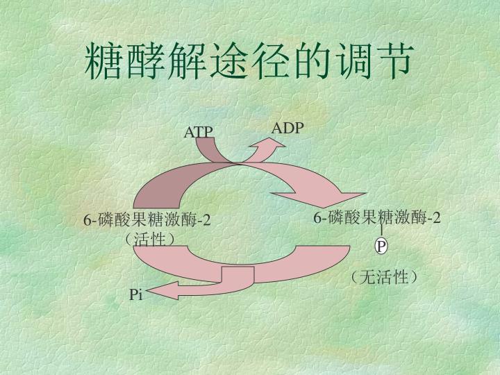 糖酵解途径的调节