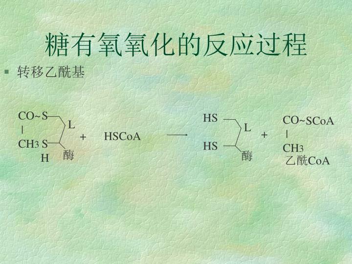 糖有氧氧化的反应过程