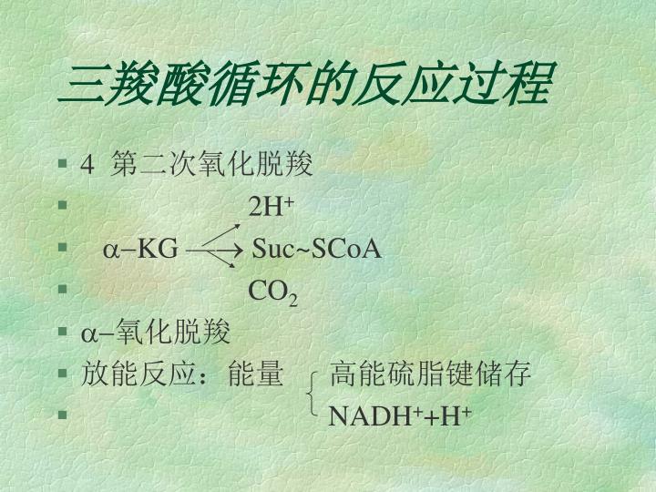 三羧酸循环的反应过程