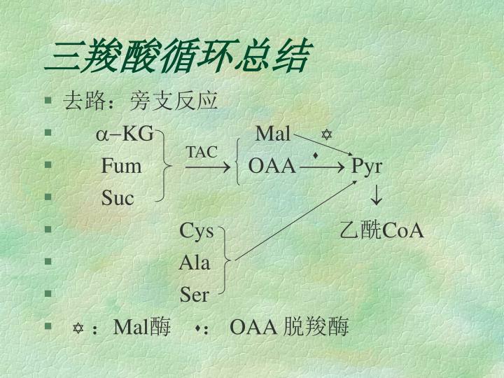 三羧酸循环总结