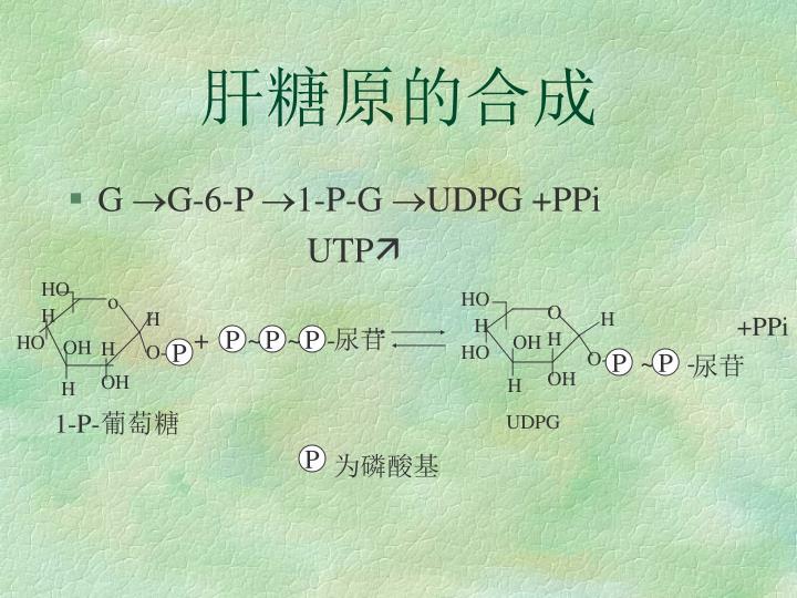 肝糖原的合成