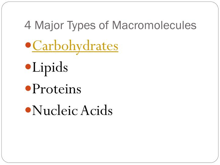 4 Major Types of Macromolecules