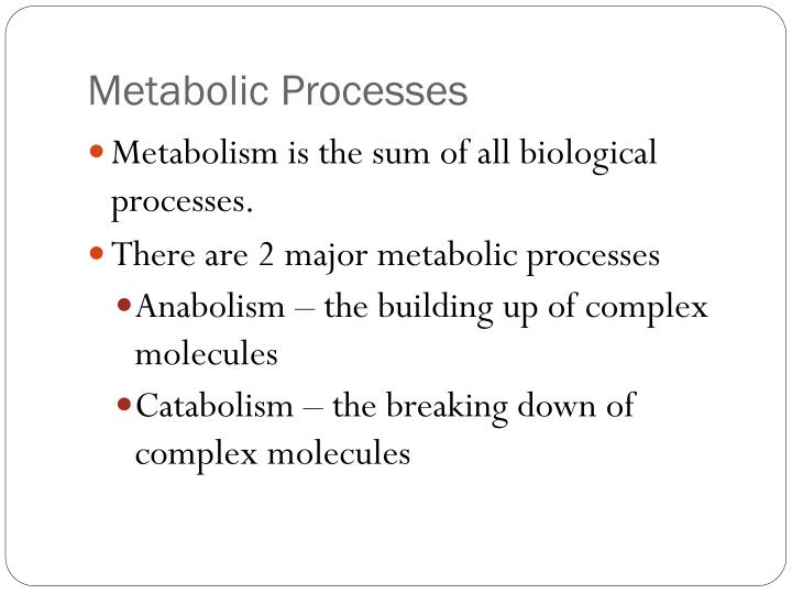 Metabolic Processes
