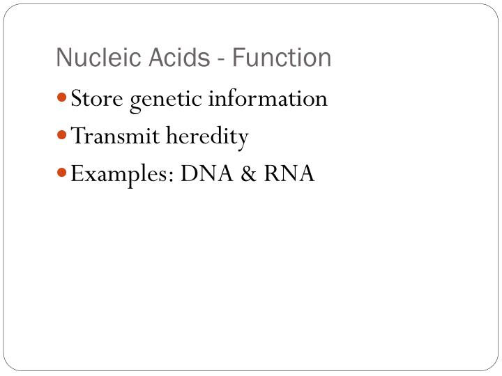 Nucleic Acids - Function