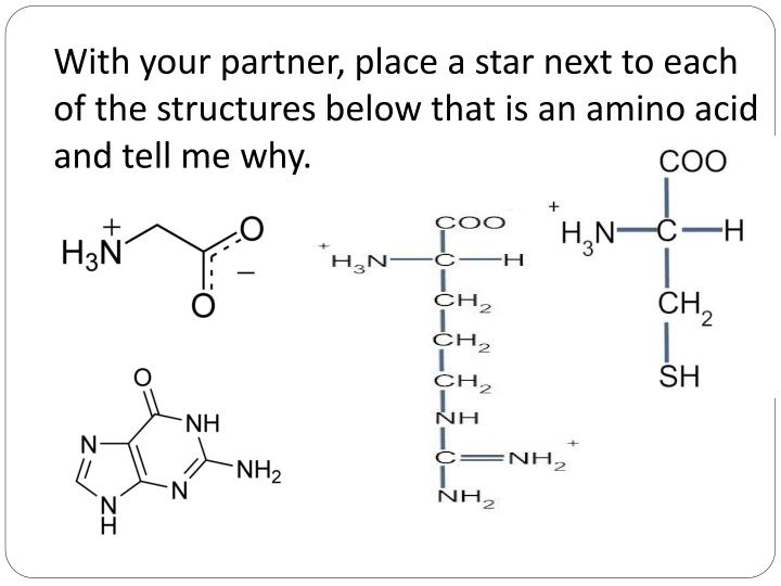 With your partner, place a star next to each of the structures below that is an amino acid and tell me why.