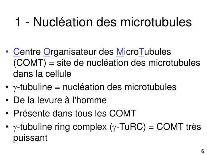 1 - Nucléation des microtubules