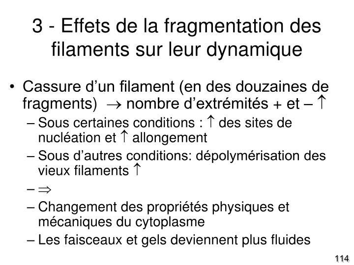 3 - Effets de la fragmentation des filaments sur leur dynamique