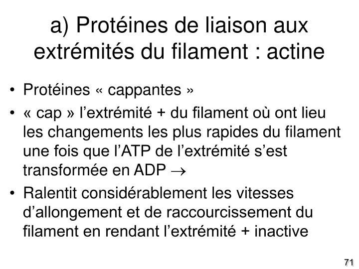 a) Protéines de liaison aux extrémités du filament : actine
