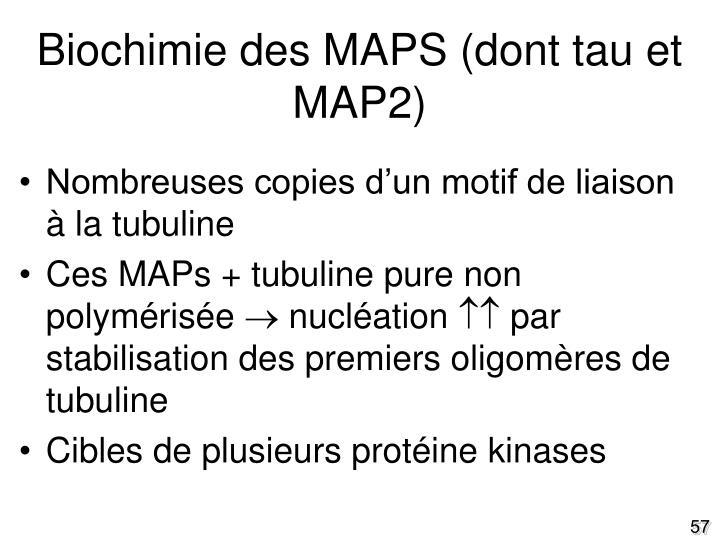 Biochimie des MAPS (dont tau et MAP2)
