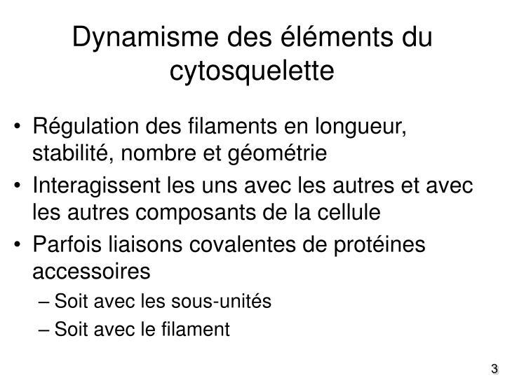 Dynamisme des éléments du cytosquelette