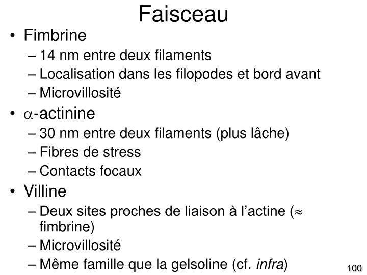 Faisceau