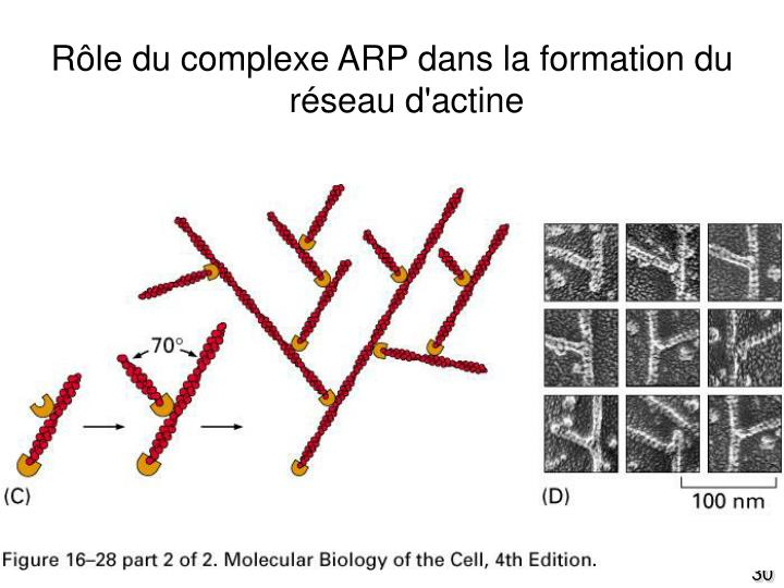 Fig16-28(C)