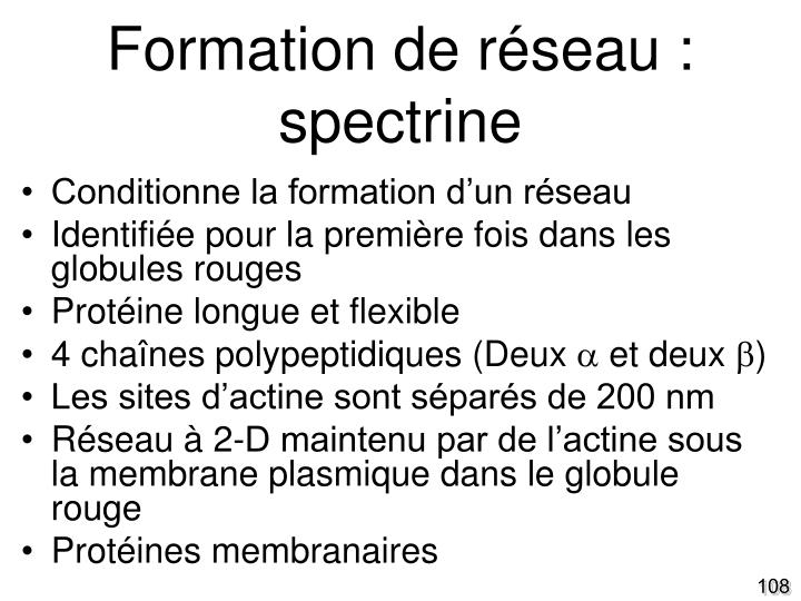 Formation de réseau : spectrine