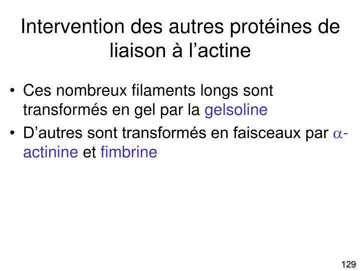 Intervention des autres protéines de liaison à l'actine