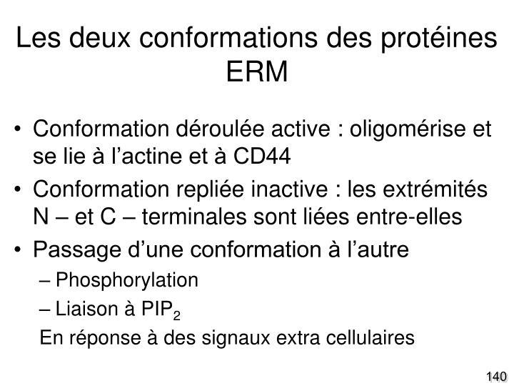 Les deux conformations des protéines ERM