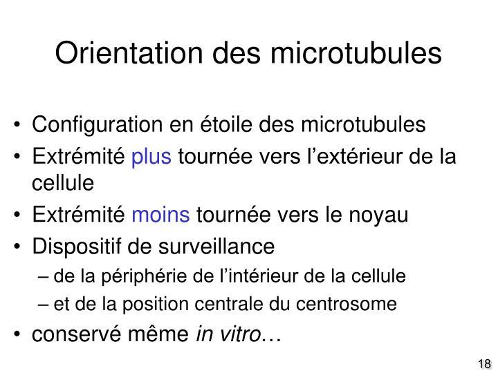 Orientation des microtubules