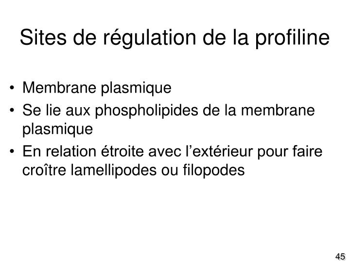 Sites de régulation de la profiline