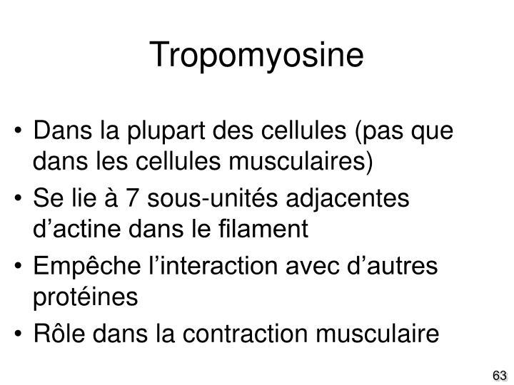 Tropomyosine