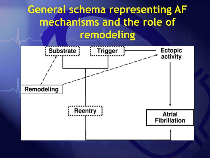General schema representing AF mechanisms and the role of remodeling
